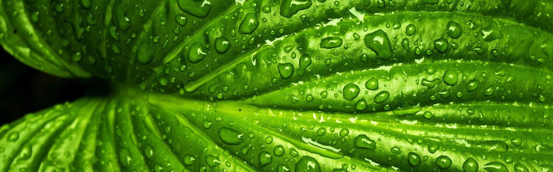 Pflanzenkläranlage